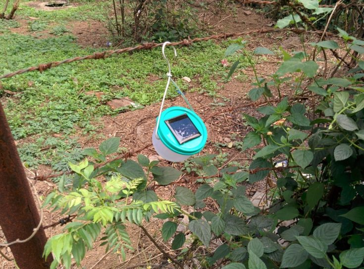 DIY nocturnal solar lights hang on a barb wire fence surrounded with green leaves.