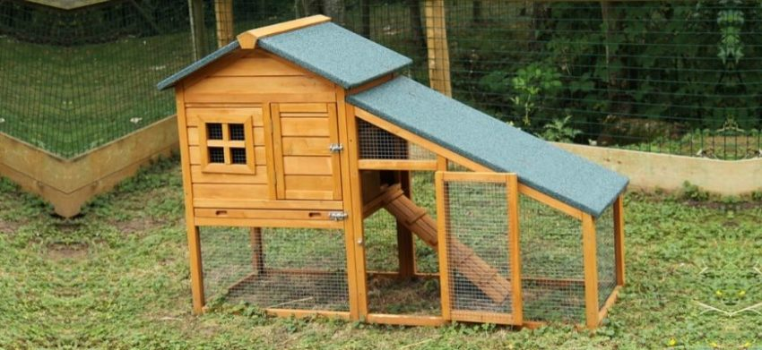 chicken coop at the backyard
