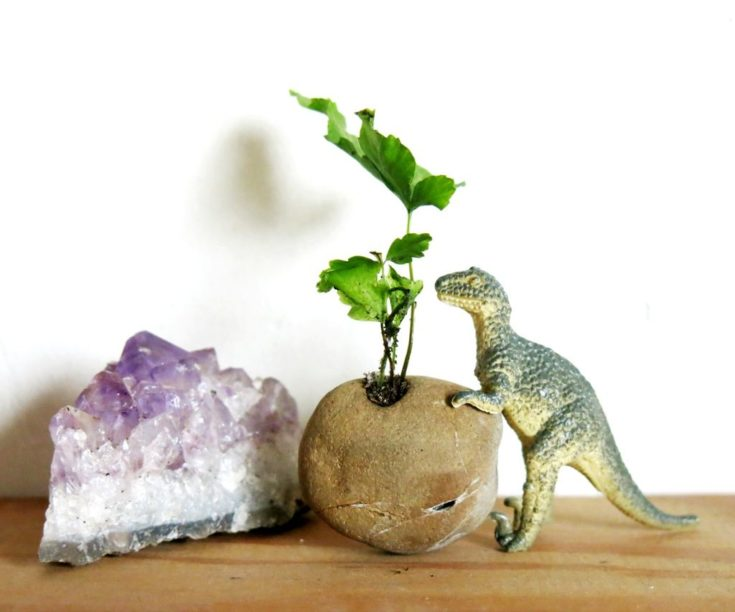 Beach rock with toy dinasour holding it and a little plant planted.