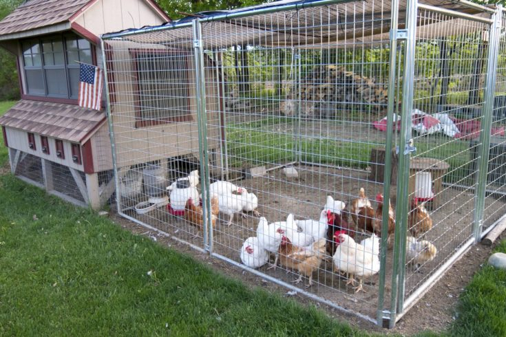 Small chicken coop and fenced area for egg laying fowl