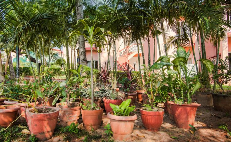 Many clay pots with tropical plants and flowers in a shady garden against palm trees and the house with pink walls
