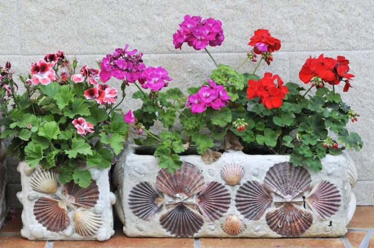 DIY decorative concrete containers for placement anywhere you feel you need a bit of greenery.