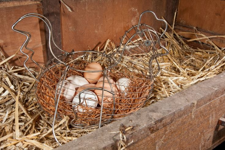 Chicken eggs in chicken shaped basket in nesting box.