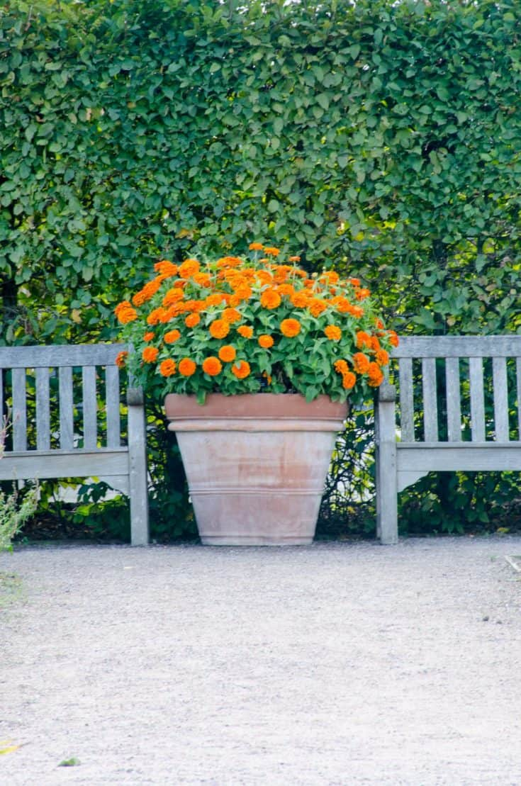 Orange flowers in terracotta pot next to benches