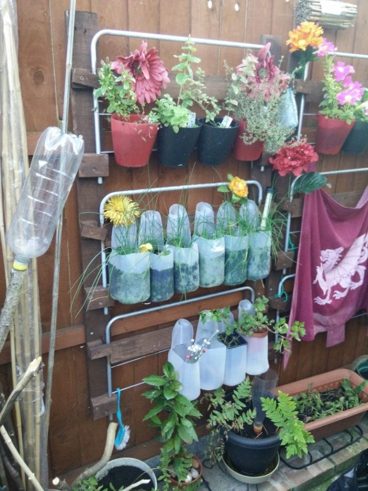 Used milk jugs recycled and turned into plant planters.