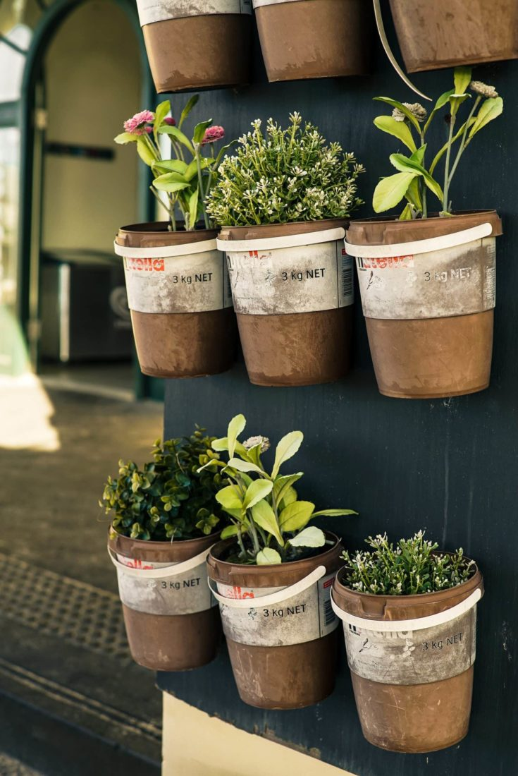 Paint cans turned into planters and used it for vertical gardening.