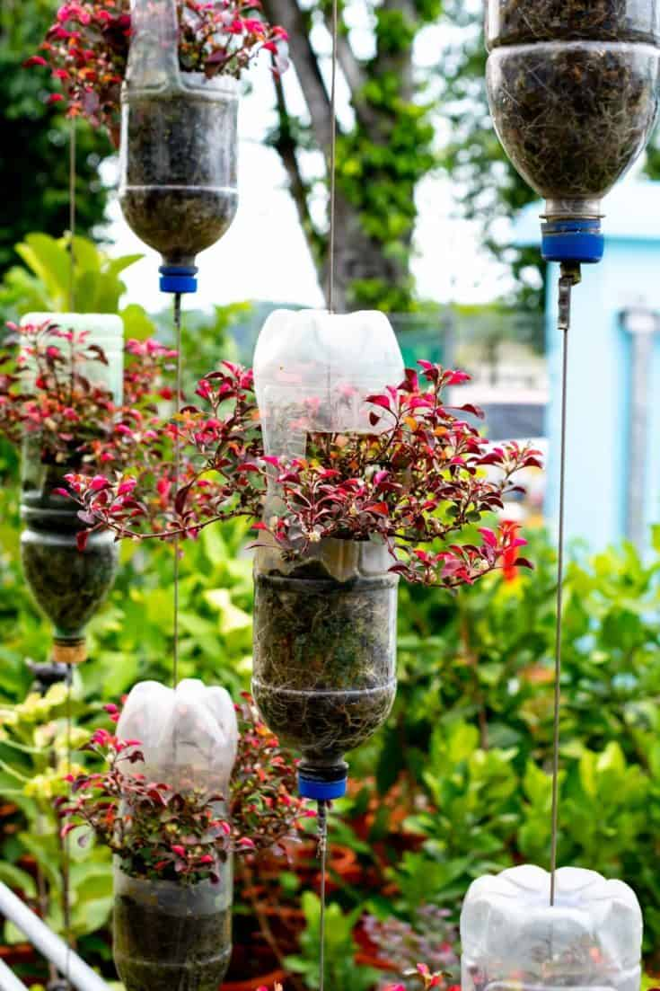 Plastic bottles cut in half and used into planters.