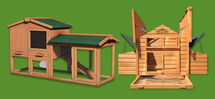 Chicken Coops for the Backyard in green background