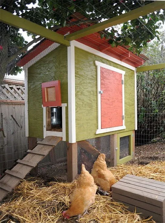 Chicken coop with chickens on the ground