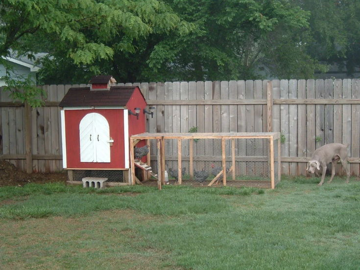 Backyard Coop with chicken inside
