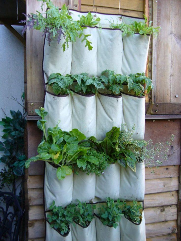 Hanging shoe organizer use for planting vegetables.