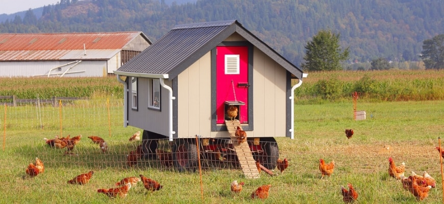 Cosy chicken coop in the middle of fence field and hens on the ground.