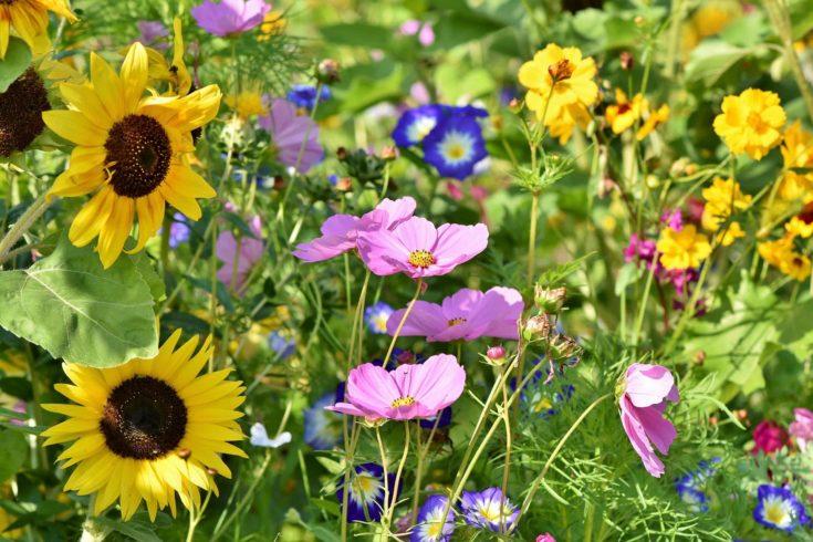 Variety of wild flowers