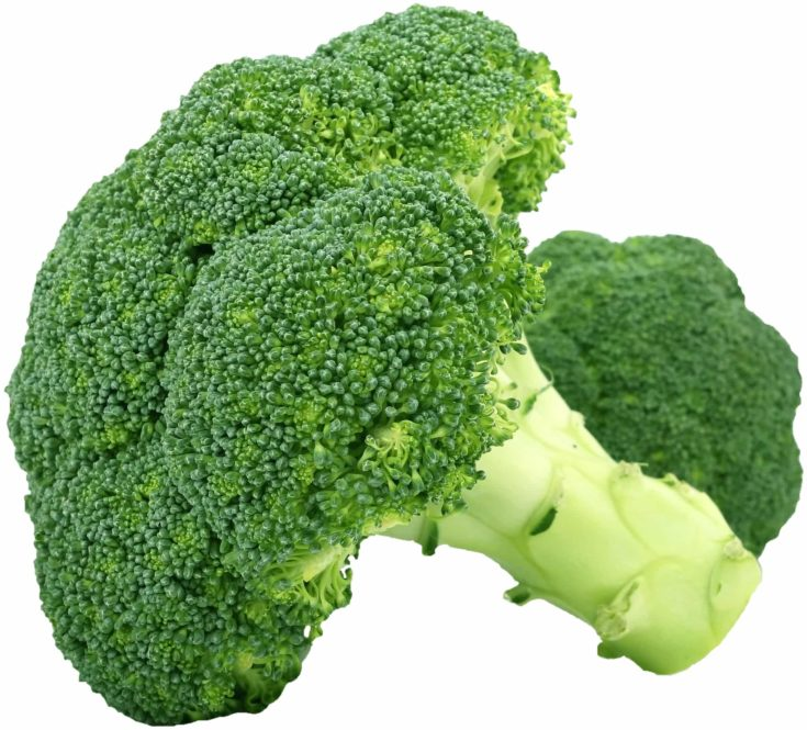 Focused shot of broccoli vegetable in a white background.