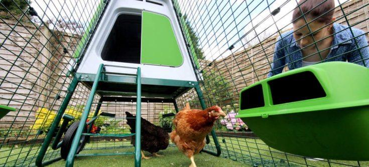 Chickens in the Eglu Go UP chicken run