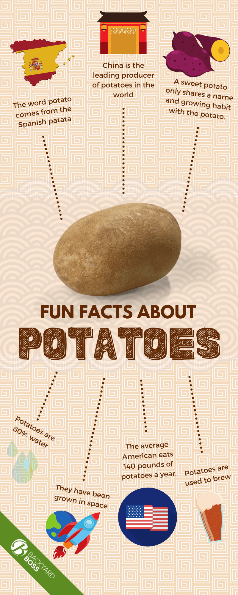 Fun Facts About Potatoes - Infographic
