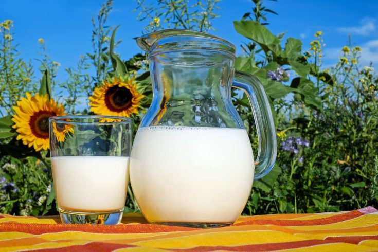 Milk on a glass and pitcher with sunflowers at the background.