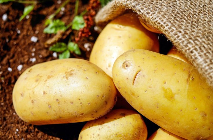 closeup shot of potatoes out from sack.