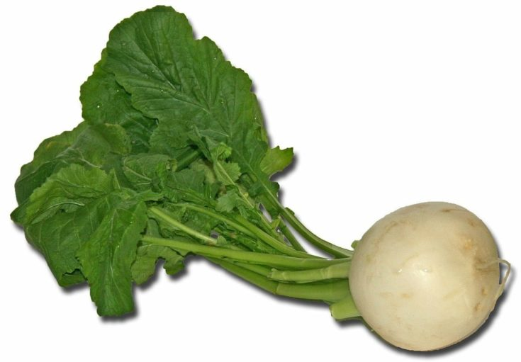 Turnip vegetable in a white background.