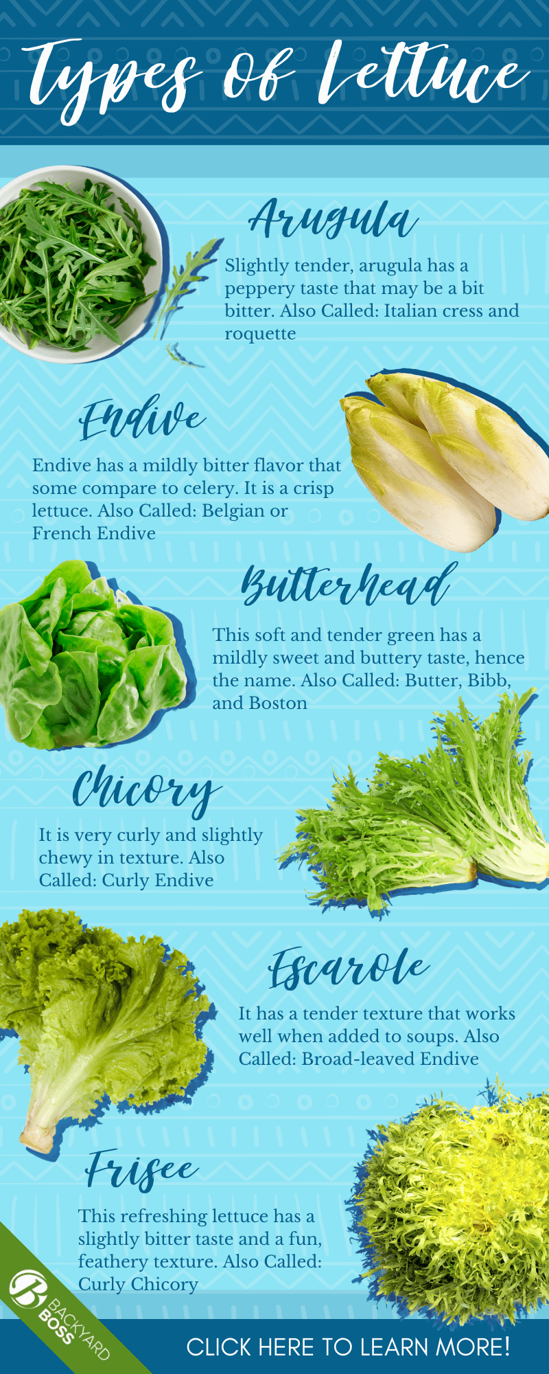 Everything You Need to Know About Lettuce - Infographic