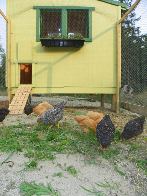 Downeast Thunder Farm Chicken Coop Plan