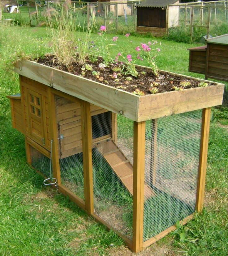 Chicken Coop with raise garden bed at the top