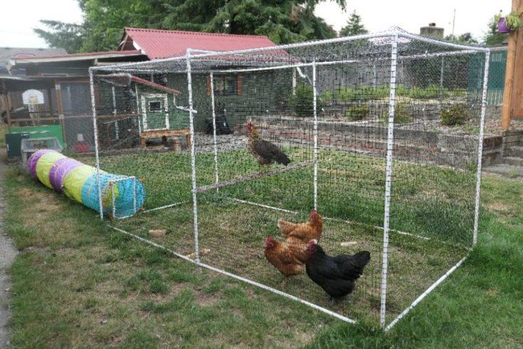 portable PVC pipe chicken run