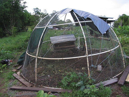 A Chook Dome of the classic Woodrow design