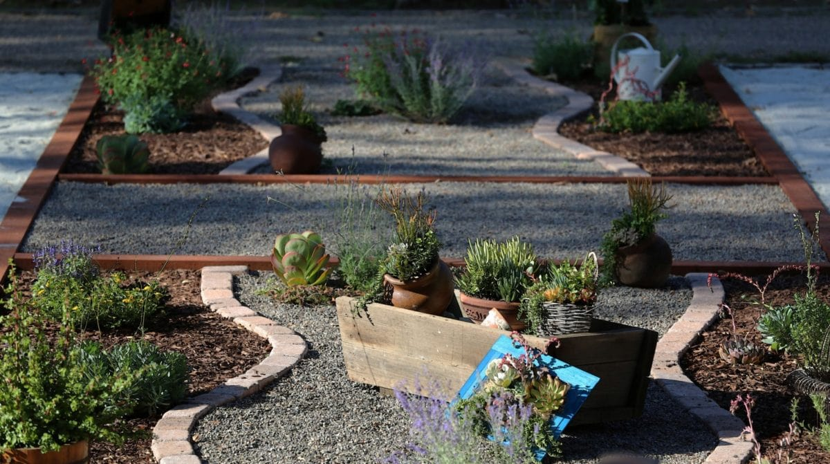 Xeriscaping For Beginners: Guide to Xeriscape Plants & more