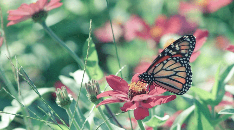 Everything You Need To Plant A Butterfly Garden