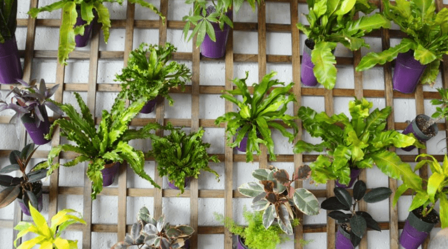 20 Fun And Interesting Ways To Display Your Houseplants