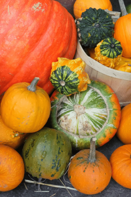 winter squash varieties together in a pile