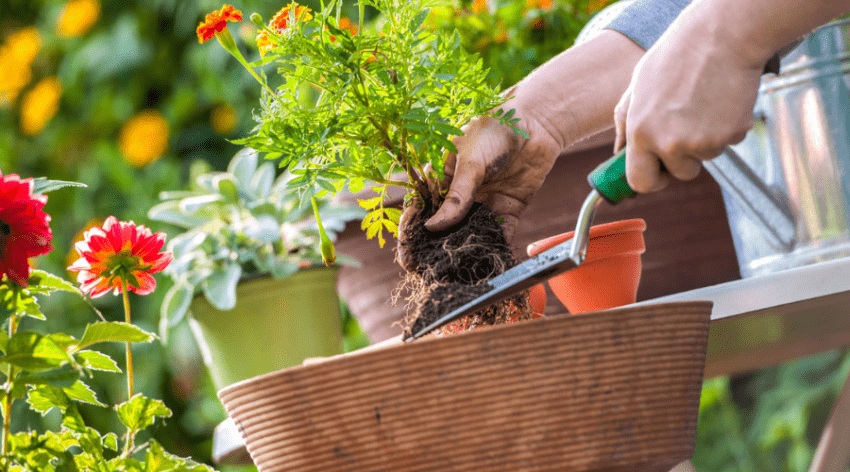 Featured Image - CAN GARDEN SOIL BE USED IN POTS_