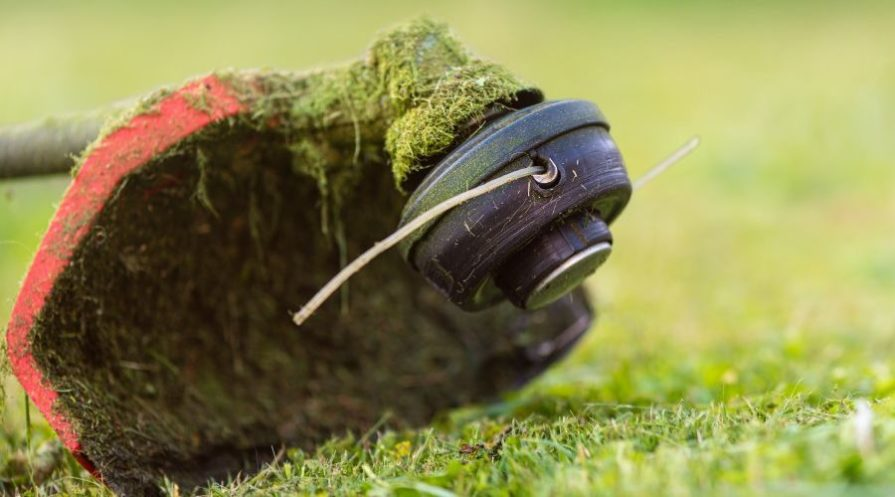 String trimmer head sitting on cut lawn with line poking out.