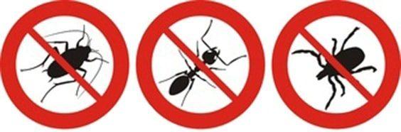 deter-garden-pests