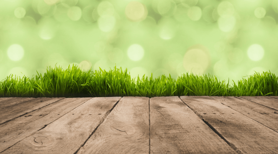 Green grass beside a walkway