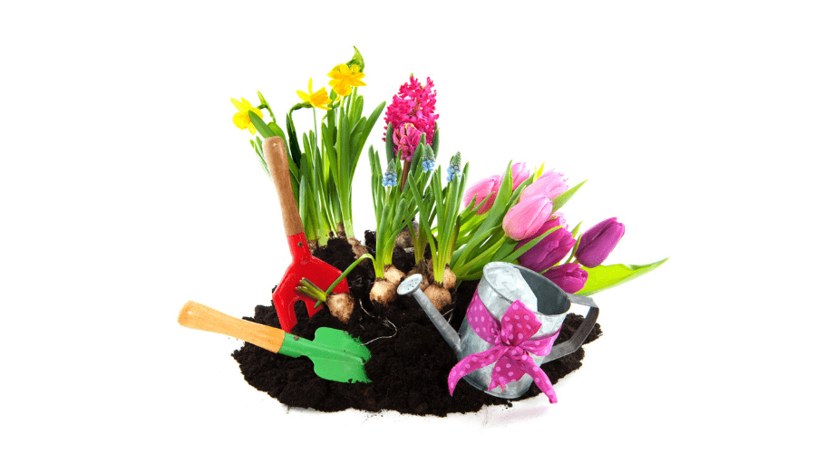 Featured Image - HOW TO GROW BULBS INDOORS