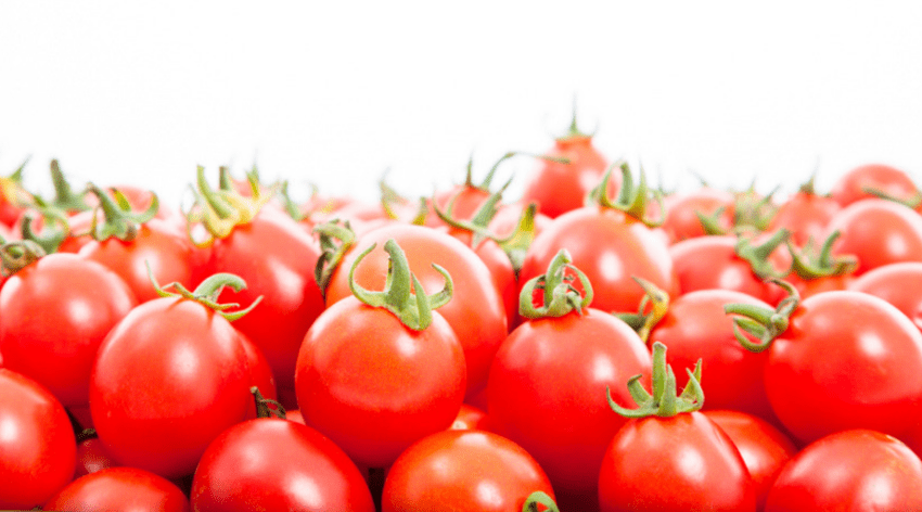 Featured Image - GROW YOUR TOMATOES WITH THESE EASY TIPS