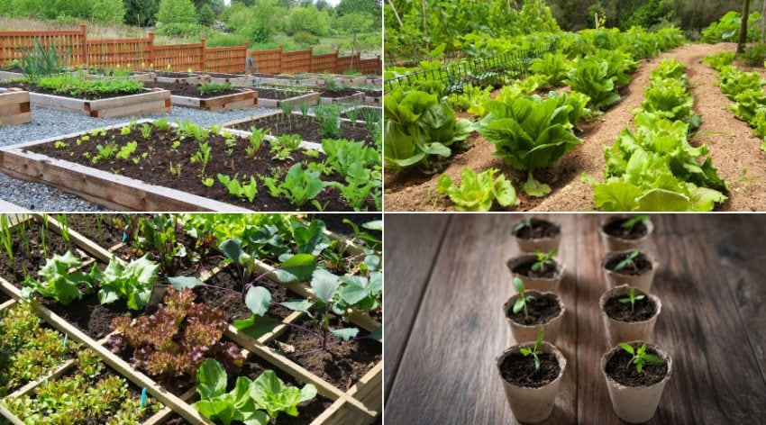 Featured Image - VEGETABLE GARDENING FOR BEGINNERS_ START SIMPLE FOR THE BEST RESULTS