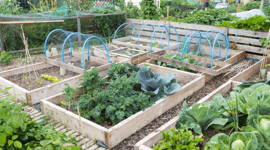 Featured Image - RECLAIM YOUR GARDEN BED FOR SPRING PLANTING