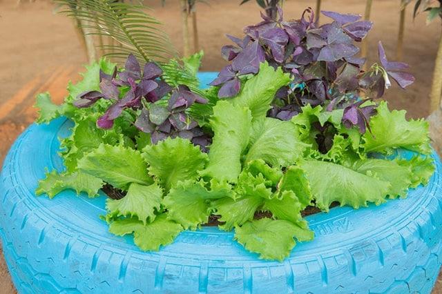 Tire Vegetable Garden