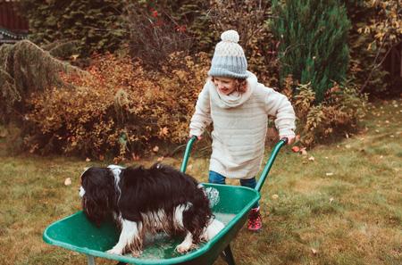 dog in a wheelbarrow
