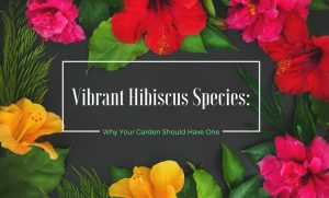 Vibrant hibiscus species - Why your garden should have one
