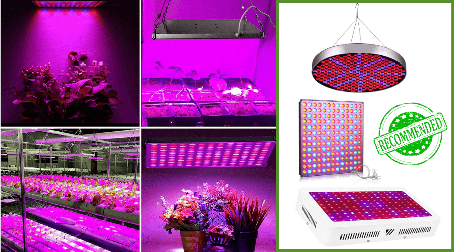 Featured Image - BEST GROW LIGHTS COMPARISONS