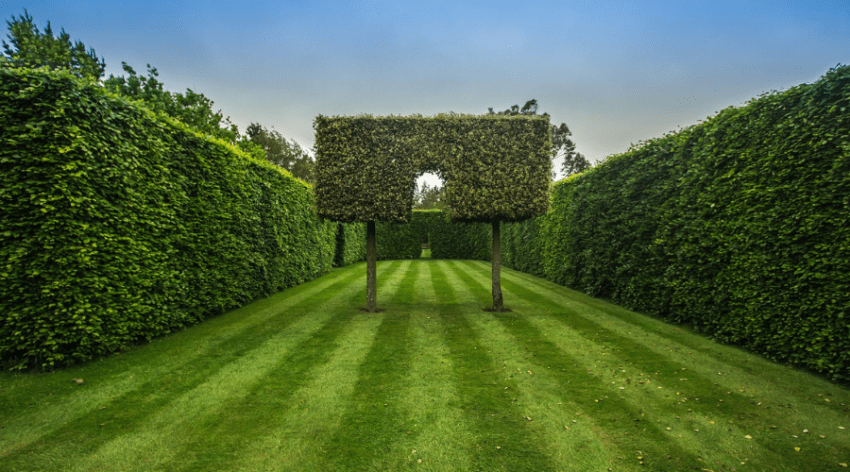 Featured Image - THE BEST LANDSCAPE HEDG IDEAS_ #39 IS AWESOME!