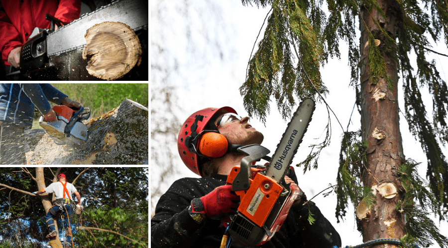 Featured Image - WHAT CHAINSAW SIZE DO I NEED_