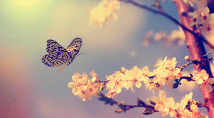 Featured Image - BEST BLOOMS FOR BUTTERFLY HABITAT