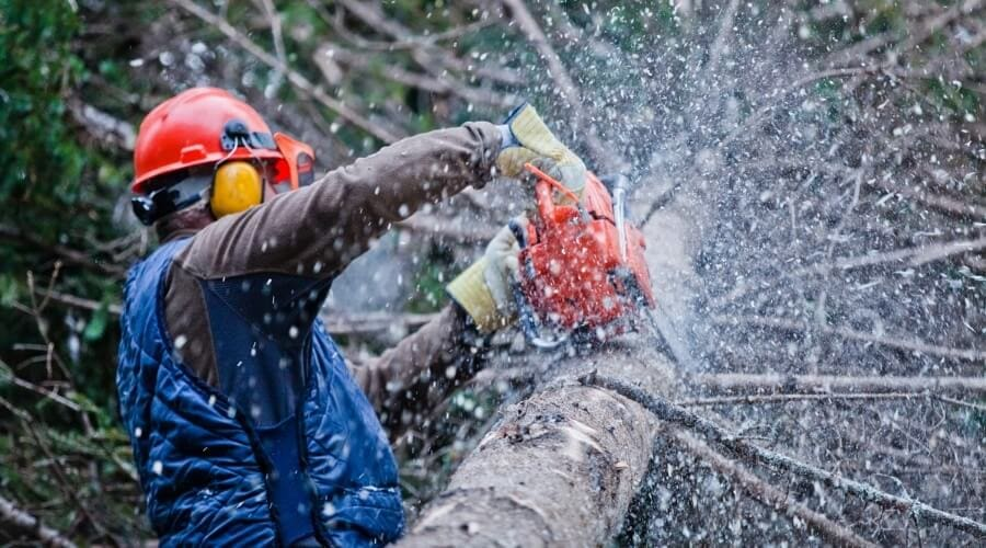 A man using a chainsaw to cut a tree and is wearing protective gears