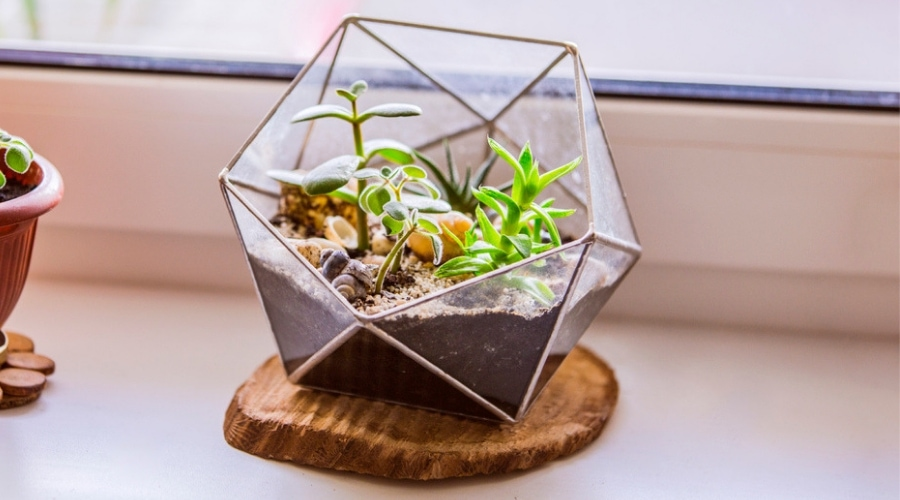 Featured Image - 66 of the Best Small Terrarium Ideas_ #27 is Super Cool!