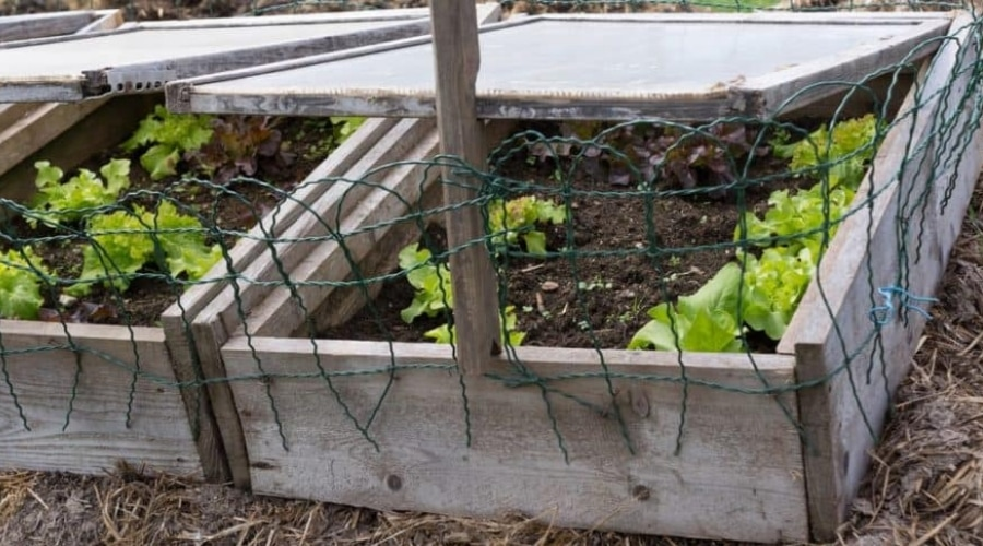 Featured Image - Everything You Need to Know About Cold Frame Gardening